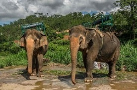 elephant ridding tour dalat