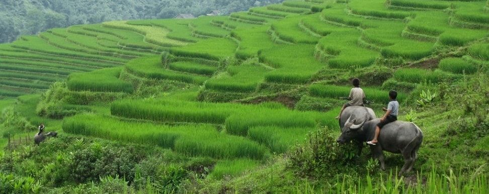 Vietnam Tourist Attractions . What to See & Do in Vietnam