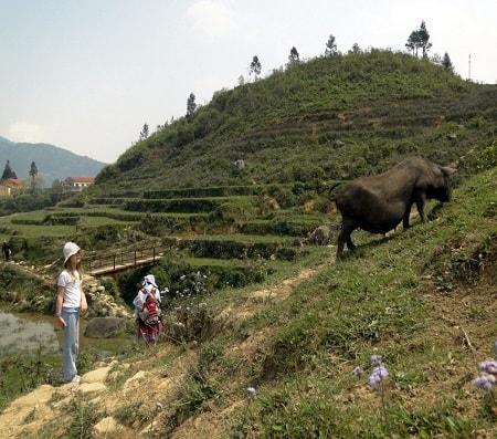 sapa trekking routes trails
